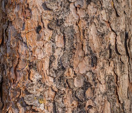 Tree texture background with brown and orange tone. 版權商用圖片