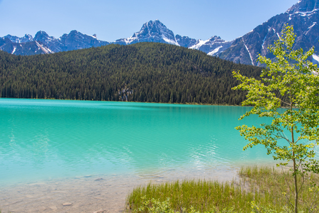 Canada forest landscape with lake and mountain in the background, Alberta. 版權商用圖片
