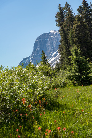 Canada forest landscape with big mountain in the background, Alberta. 版權商用圖片