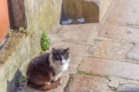 Adorable fluffy cat sitting in the old town of Europe in day light.