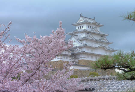 White Castle Himeji Castle in cherry blooson sakura blooming in the front an blue sky