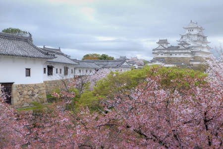 White Castle Himeji Castle in cherry blooson sakura blooming in the front and blue sky