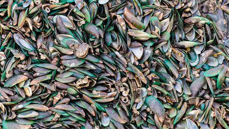shell: shells Stock Photo