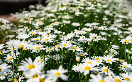 white blossom flower. Zdjęcie Seryjne