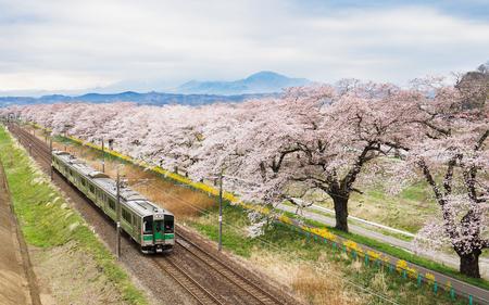 Cherry blossoms or Sakura and train Foto de archivo