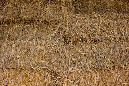 compressed rice: Compressed straw from rice background in farming in Thailand. Stock Photo