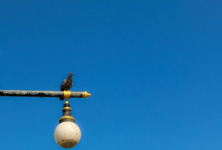lamp post: Pigeons on lamp post