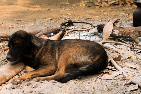 pyre: Dog lying on the ground
