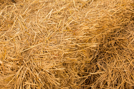 animal feed: Piles of straw, detail of piled straw for animal feed Stock Photo