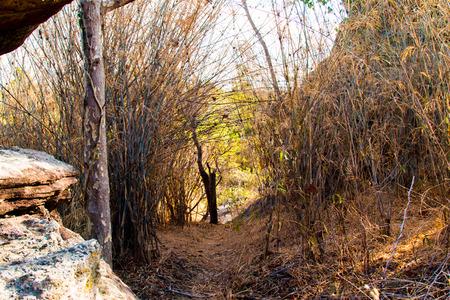 maleza: La ruta a pie en el bosque