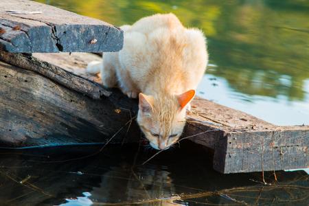 gato jugando: Cat playing the Waterfront Foto de archivo