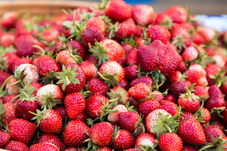 Strawberry berries fresh from the tree.