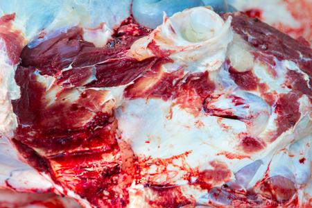 insides: Necropsy cow disease diagnosis Stock Photo