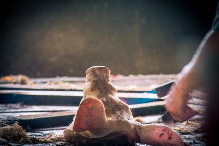 Swine slaughterhouse uses hot water for swine breeding in Thailand.