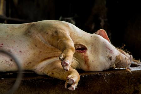 slaughter: Swine slaughterhouse uses hot water for swine breeding in Thailand.