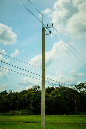 Electricity poles are located on the electric field in rice fields.