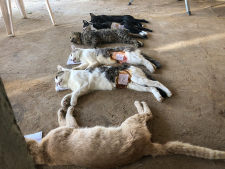 Neutering dogs and cats in World Rabies Day,Surgical sterilization of dogs, cats Rabies vaccine