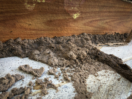 Termites destroy wood from soil problems in the home. Reklamní fotografie