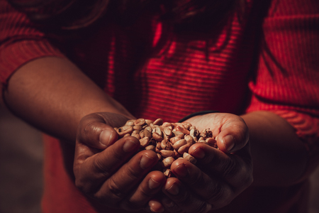 Brown unroasted coffee beans on hand