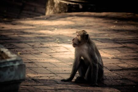 Monkey alone in the middle city Cheerfulness Foto de archivo