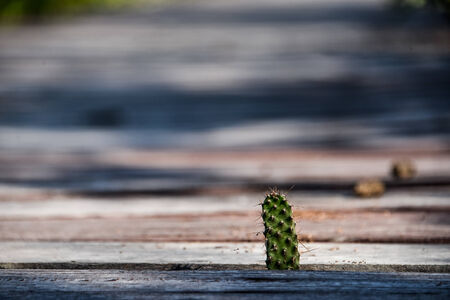trees with thorns: cactus