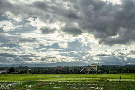 house at the middle of the rice field photo