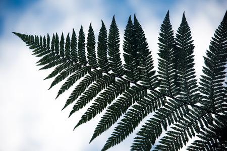 jag: jagged leaf