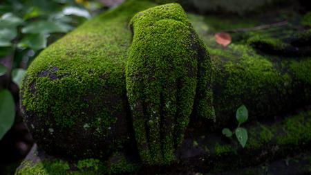 buddha hand: green moss on Buddha hand