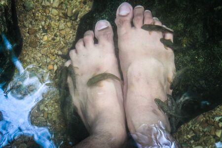 fish spa: foot spa by fish Stock Photo
