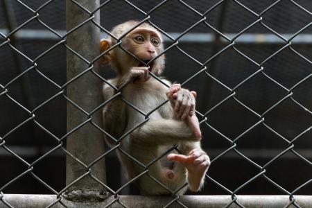 Sad monkey in cage photo