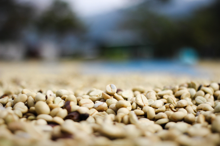 Red berries coffee bean process in factory.