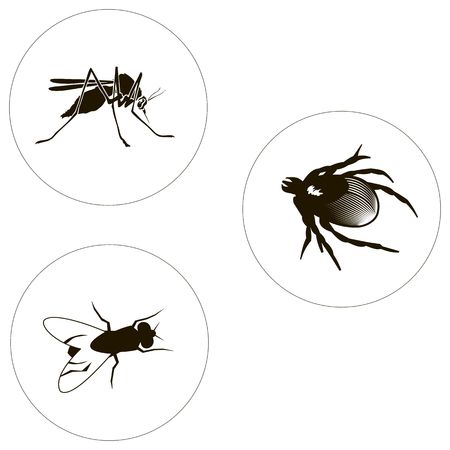 insects set including bug, fly and mosquito. Bugs icons. Illustration