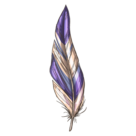 Colorful detailed beige and violet bird feather, isolated on white background. Vector