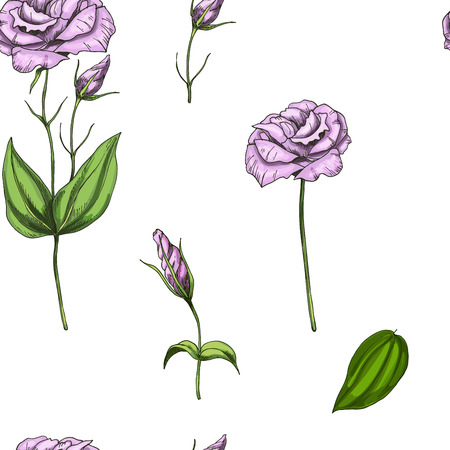 Seamless pattern with flowers of phlox isolated on white background. Vector
