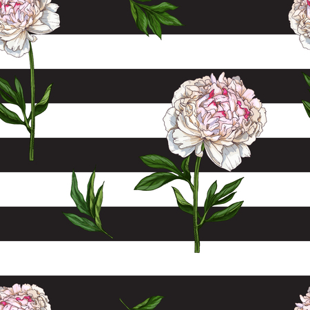 gently: Seamless pattern with gently pink peony flower isolated on black and white striped background. Vector