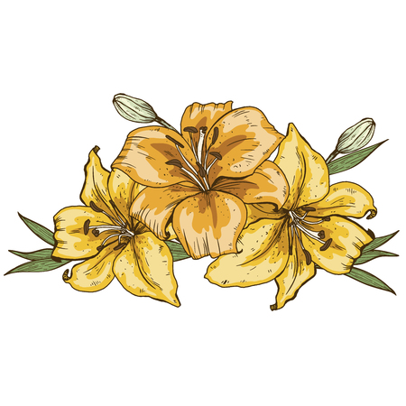 Bouquet of three yellow lily flowers hand drawn isolated on white background.