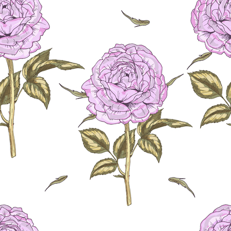 gently: Seamless pattern with gently pink rose flower isolated on white background. Vector