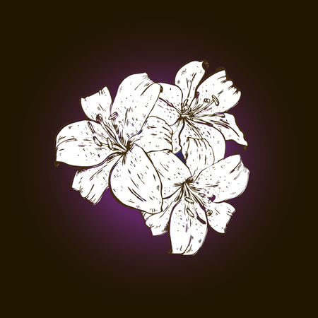Three white lily flowers hand drawn isolated on black background. Illustration