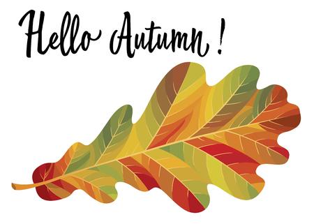 Autumn oak leaf isolated on white background. Vector