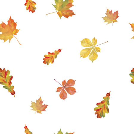A Seamless pattern with different autumn leaves. Oak, chestnut and maple leaves isolated on white background. Vector