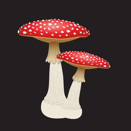amanita: Mushroom isolated on black pattern. Illustration