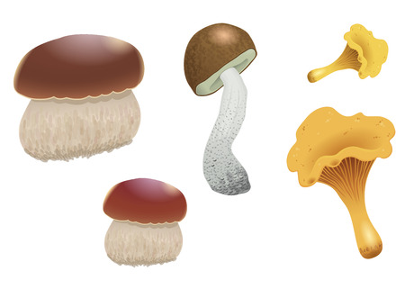 cep: A set of different mushrooms isolated on white background. Orange cap boletus, chanterelles and cep. Vector