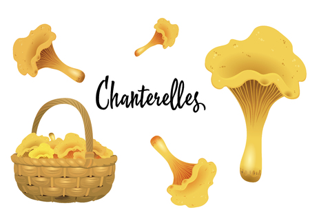Wicker basket full of chanterelles and mushroom separately isolated on white background. Vector