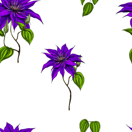 clematis: Seamless pattern with clematis, leaves and stems on white background. Vector