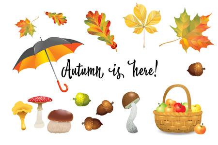 cep: Set of autumn objects. Mushrooms, umbrella, apples and fall leaves. Vector illustration Illustration
