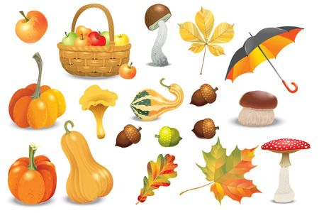 Set of autumn objects. Pumpkins different types, mushrooms, umbrella, apples and fall leaves. Vector illustration