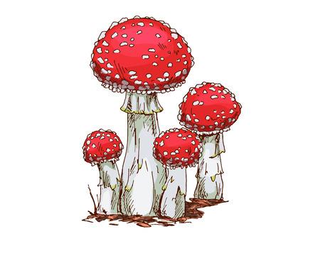 Familie von Fliegenpilz Pilze isoliert auf weißem Hintergrund. Vektor Vektorgrafik