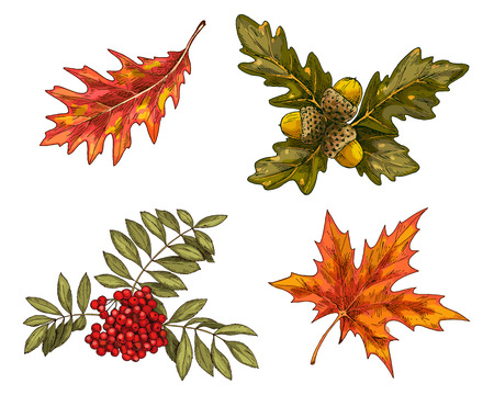 Various green and orange autumn leaves and growths isolated on white background. Vector Иллюстрация