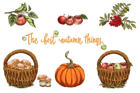 Set of autumn objects. Mushrooms, umbrella, apples and fall leaves. Vector illustration collection