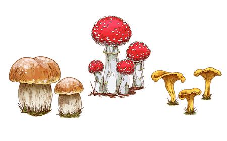 Mushrooms orange cap boletus, fly agaric and chanterelles isolated on white background. Vector illustration